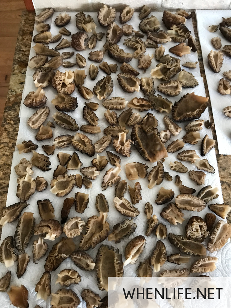 How to Care for Morels.